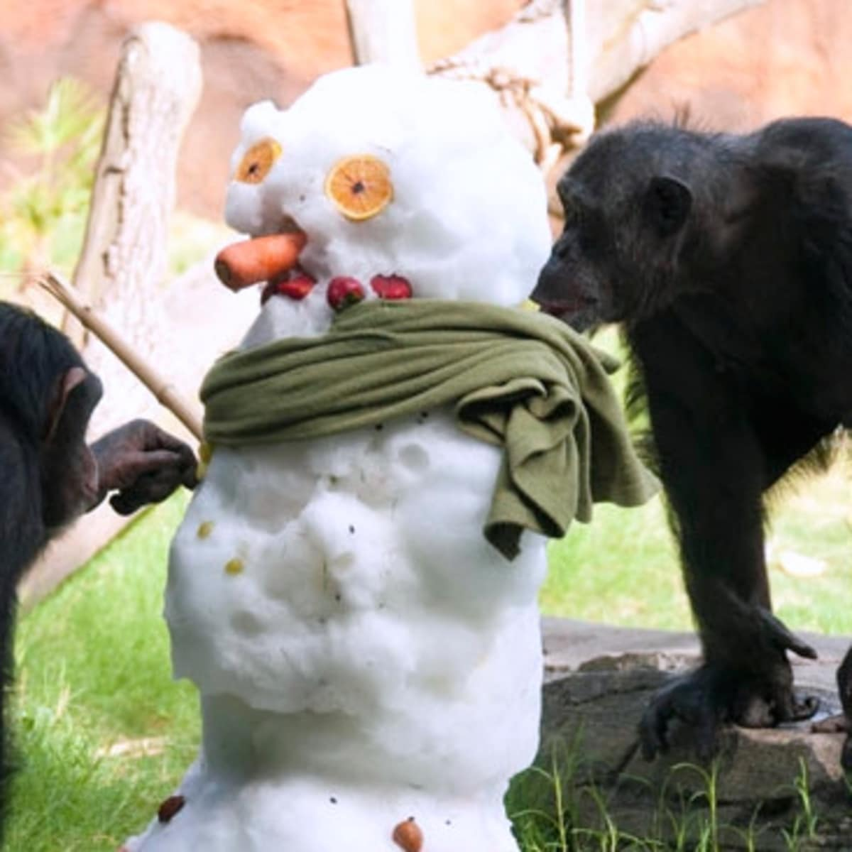 Houston, what to do this weekend, snow at at houston zoo, june 2017
