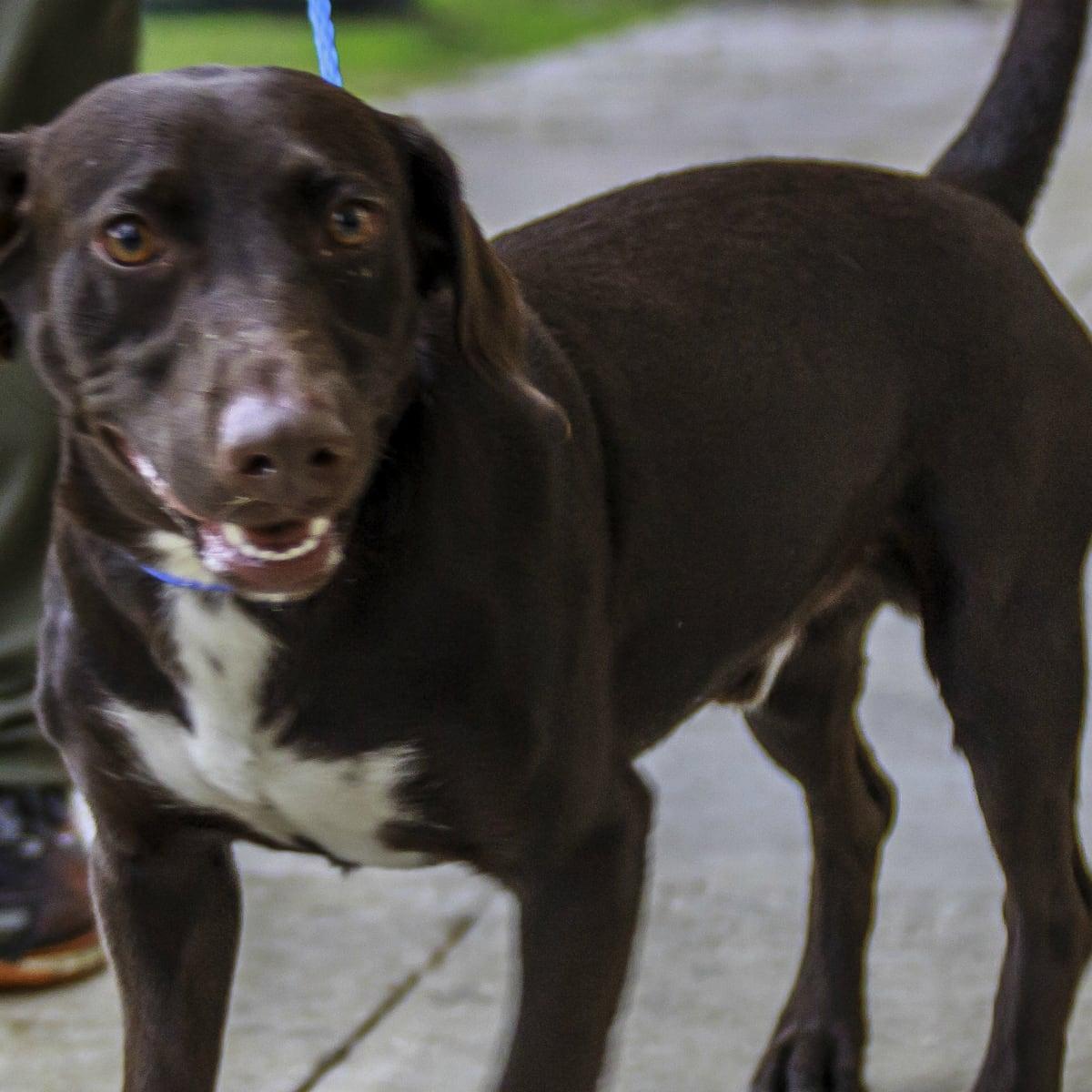 Houston - Hoffman - Pet of the Week - Choco