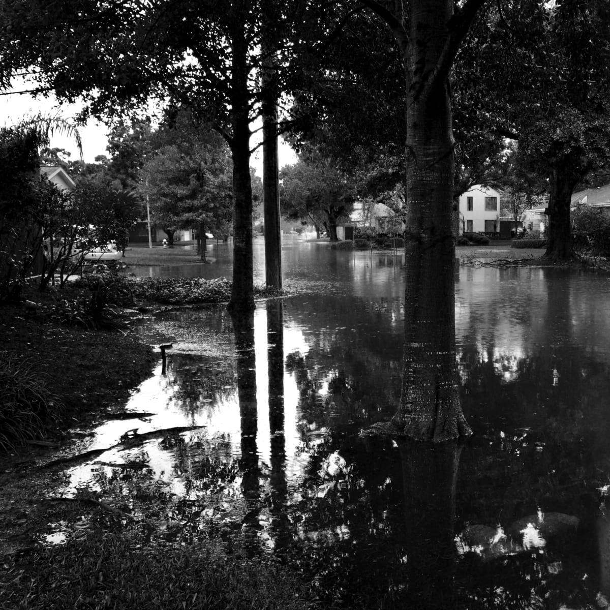MFAH: Eye on Houston, Only Rivers