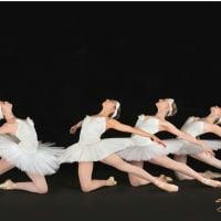 Houston Repertoire Ballet presents <i>Celebration of Dance</i>
