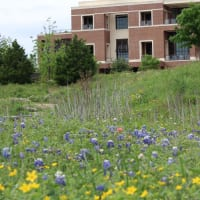 George W. Bush Presidential Center presents Bluebonnet Tours