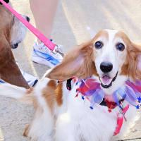Unleashed Paws presents Fur Fun Run