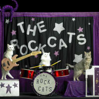 Tuna and the Rock-cats_Amazing Acro-cats_Samantha Martin_2014