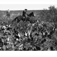 The Heritage Society presents Vaquero: Genesis of the Texas Cowboy