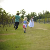 Haak Vineyards & Winery's Family Fun Day