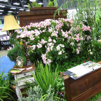 flowers at the Spring Austin Home and Garden Show