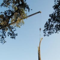 """MFAH Lecture: """"Struck by Lightning: Giuseppe Penone and the Forces of Nature"""""""