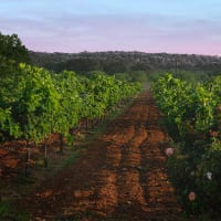 The Wine and Food Foundation of Texas Hill Country Wine Tour