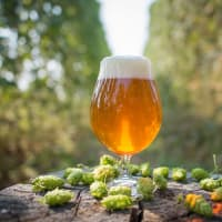 ELM Restaurant Group presents ELM Loves IPA Day!