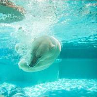 Polar Bear Plunge