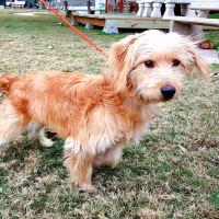 Hoffman's Houston - Pet of the Week - bear