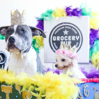 Mardi Paws: A Fundraiser for Austin Dog Rescue & Cutie PITooties