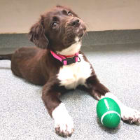 Pet of the Week-_Hoffman_Daisy puppy