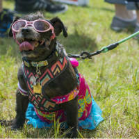 Canine Carnival and Doggone Fun Run