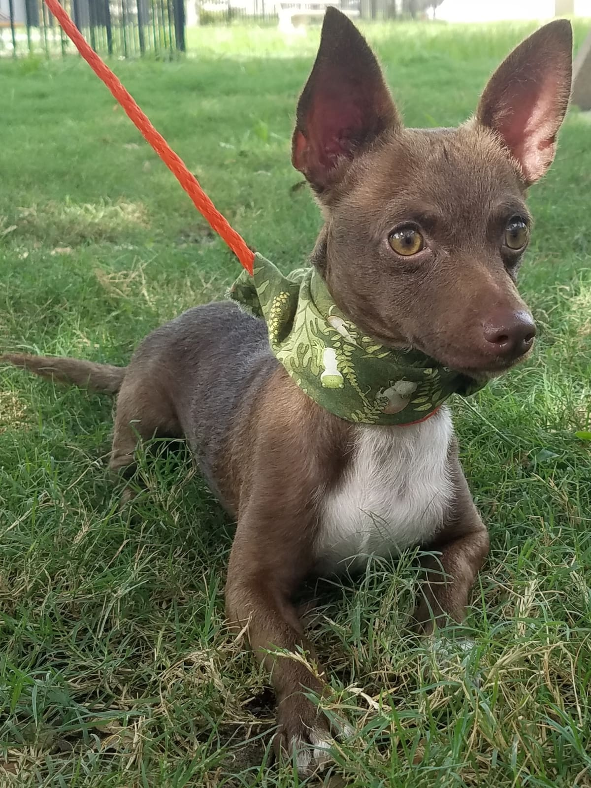 Houston, pethouse pet of the week, August 2017, Fizz