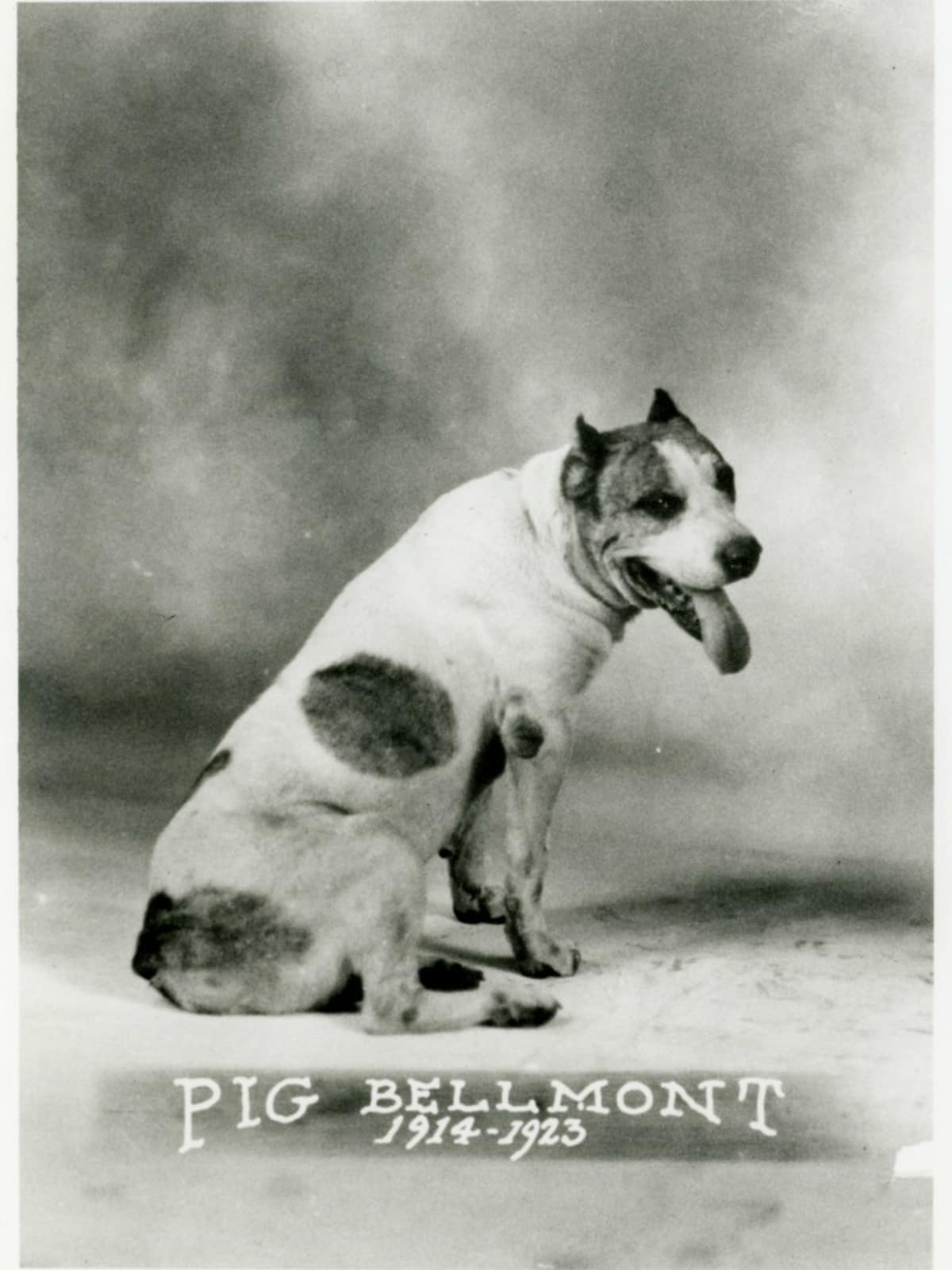 Pig Bellmont University of Texas first mascot