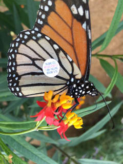 Texas Discovery Gardens presents Marvelous Monarchs: Winter