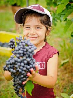 Messina Hof Winery & Resort Presents Moonlit Harvest Festival