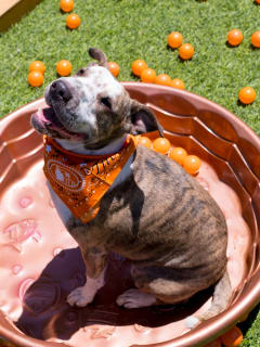Tito's Handmade Vodka presents Work Day After Pawty