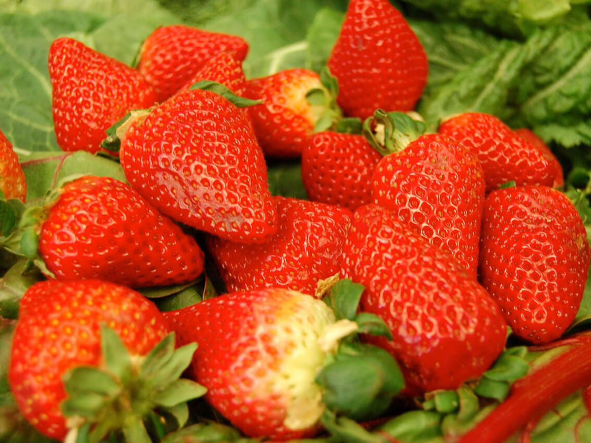 News_Joel_vegan out_strawberries