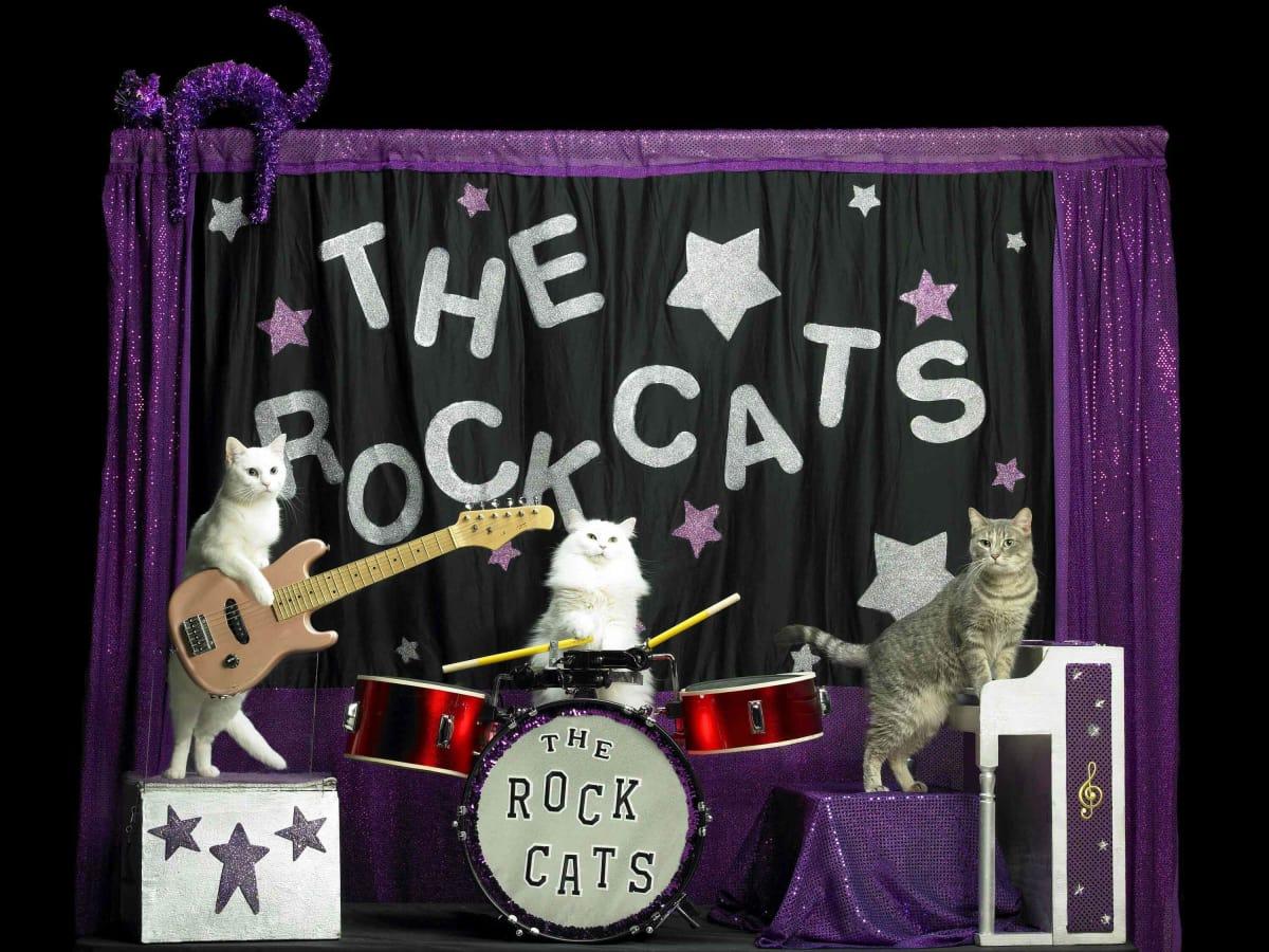 Amazing Acro-cats Hurdle