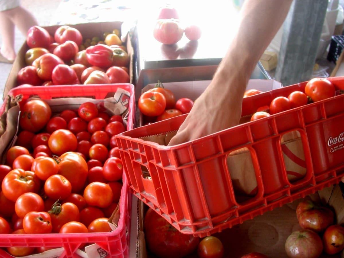 Tomato Fest