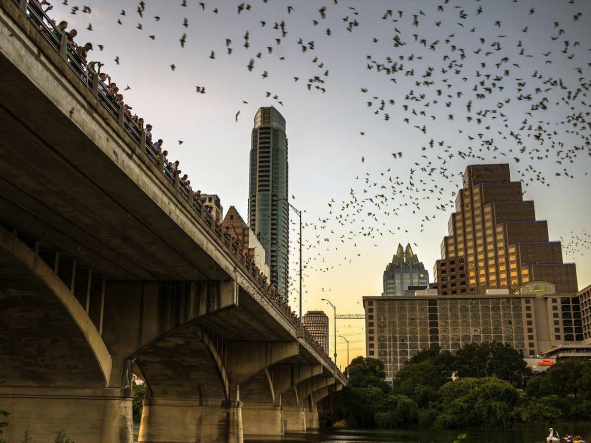 Austin downtown skyline bats Congress Bridge