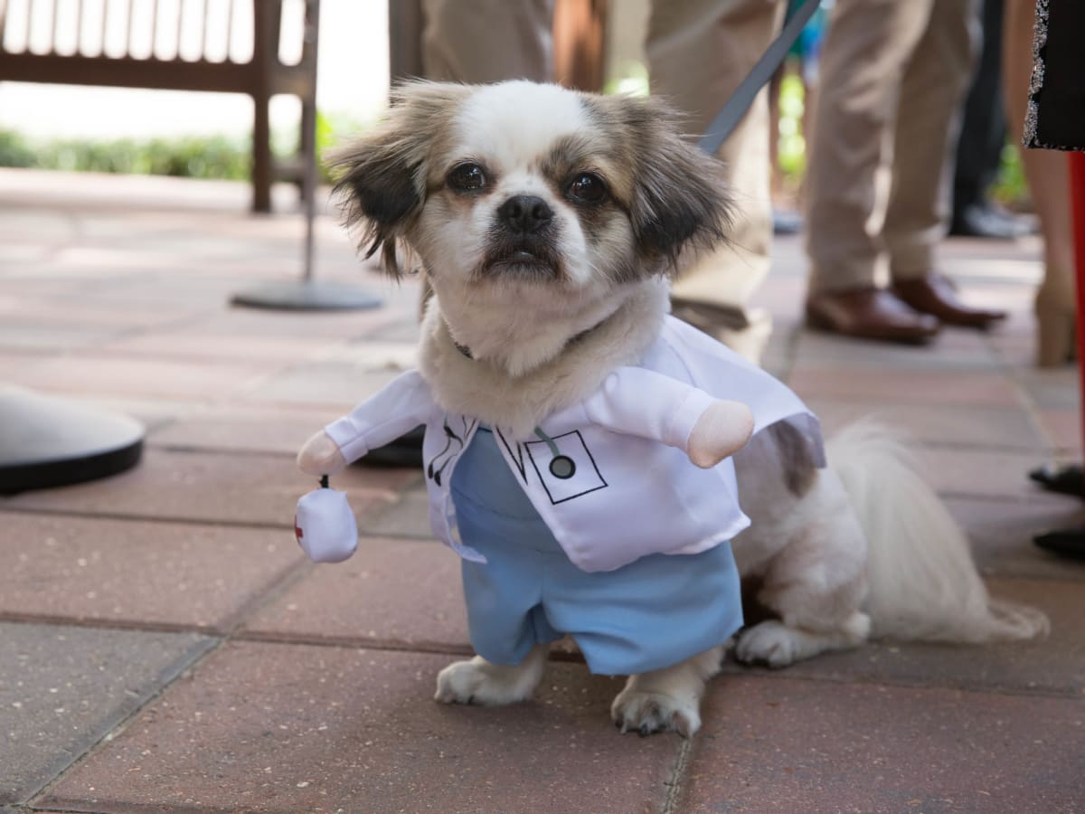 Nadia  Abelhad's dog Mr. Poe Match Day at McGovern Medical School UTHealth