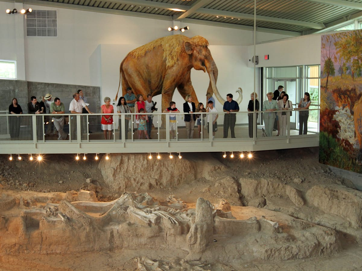 Waco & The Heart of Texas September 2014 Waco Mammoth Site bones at Mayborn Museum Complex, part of Strecker Museum