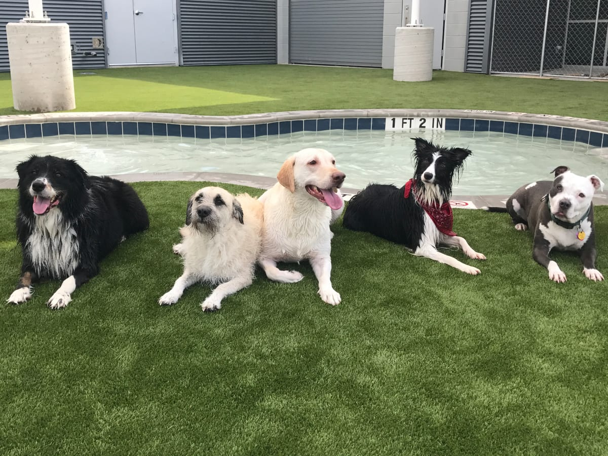 Bark and Zoom pet dog