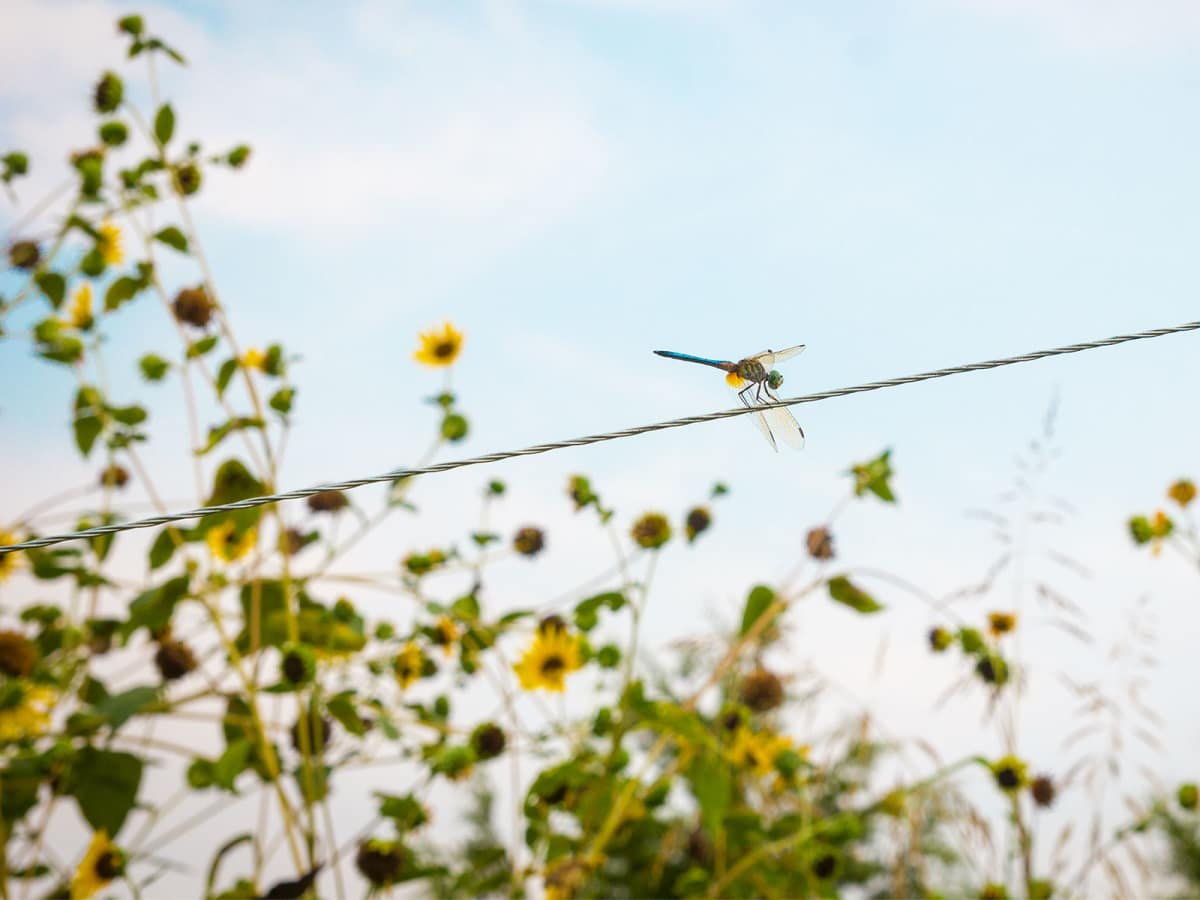 Photo of dragonfly perched on wire