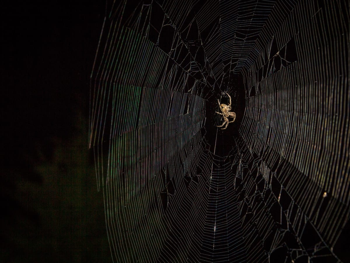 Photo of spider in spider web at night