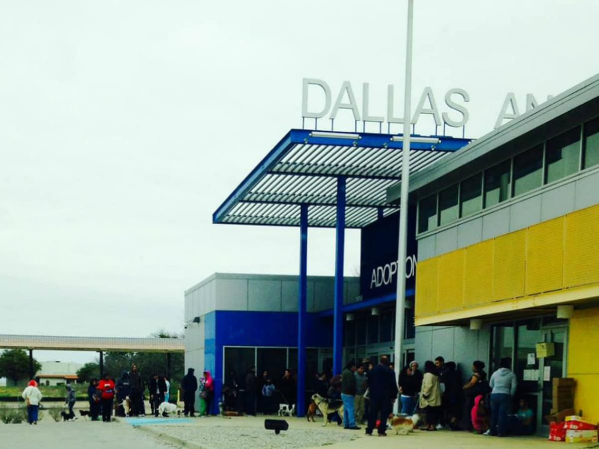 Dallas Animal Services