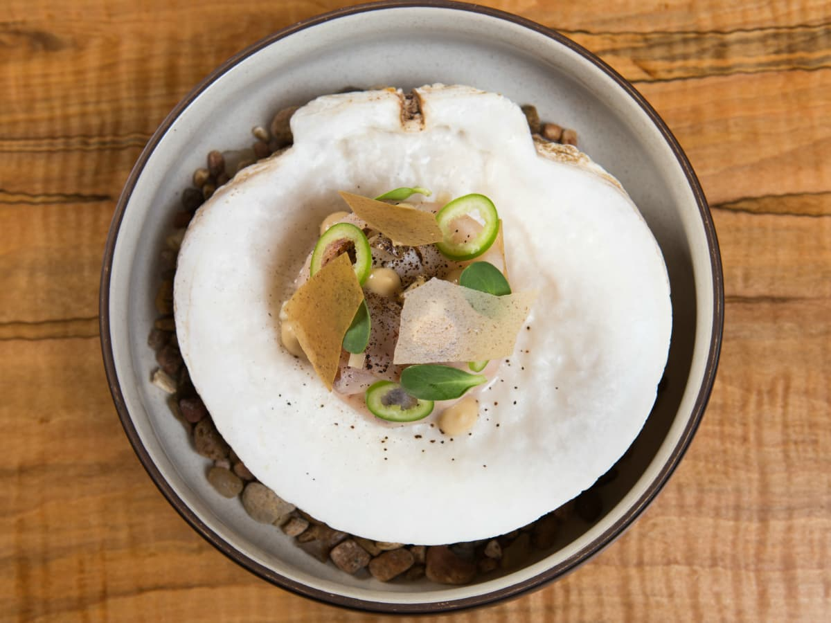 Apis oyster