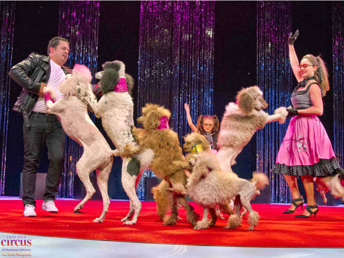 Cirque Joyeux Noel Dinner & Show