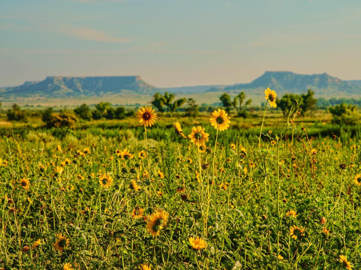 Mesa Vista Ranch, T. Boone Pickens