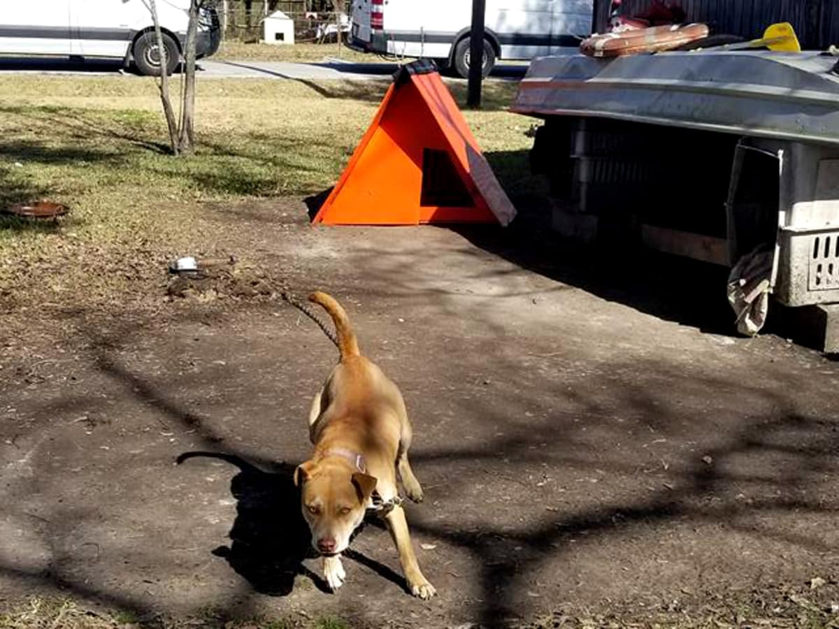Houston dog on chain with house