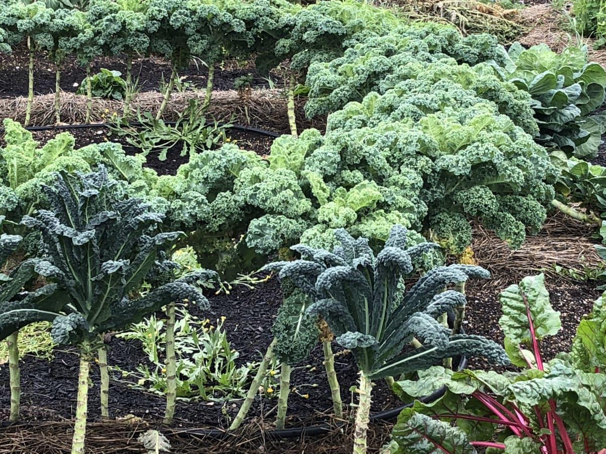 Whisper Valley lettuce farm