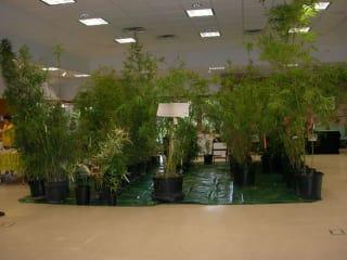 Texas Bamboo Society presents 23rd Texas Bamboo Festival