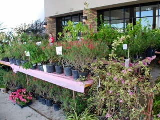River Oaks Garden Club presents 65th Annual Pink Elephant Sale