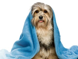Friends of the Phoenix presents 6th Annual April Showers Dog Wash and Family Fun Day