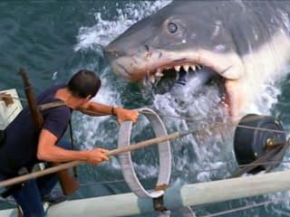 Jaws the movie shark