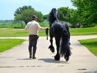 Black Star Sport Horses 2016 Spring Series