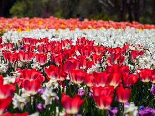 Dallas Blooms, Dallas Arboretum