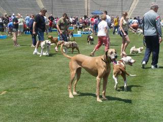 Dog Bowl, Cotton Bowl