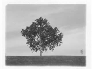 Hangin East Again photo of tree