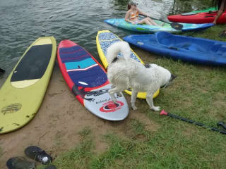 """Bayou City Outdoors hosts """"Stand Up Paddleboard Lessons"""""""