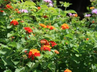 Houston Arboretum Winter Native Plant Sale