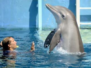ReelAbilities, Houston Disabilities Film Festival 2015: Dolphin Tale 2