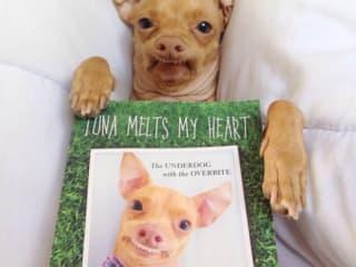 Tuna the Chiweenie_Tuna Melts My Heart_Courtney Dasher